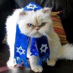 Dobrá kočka, která nešidí